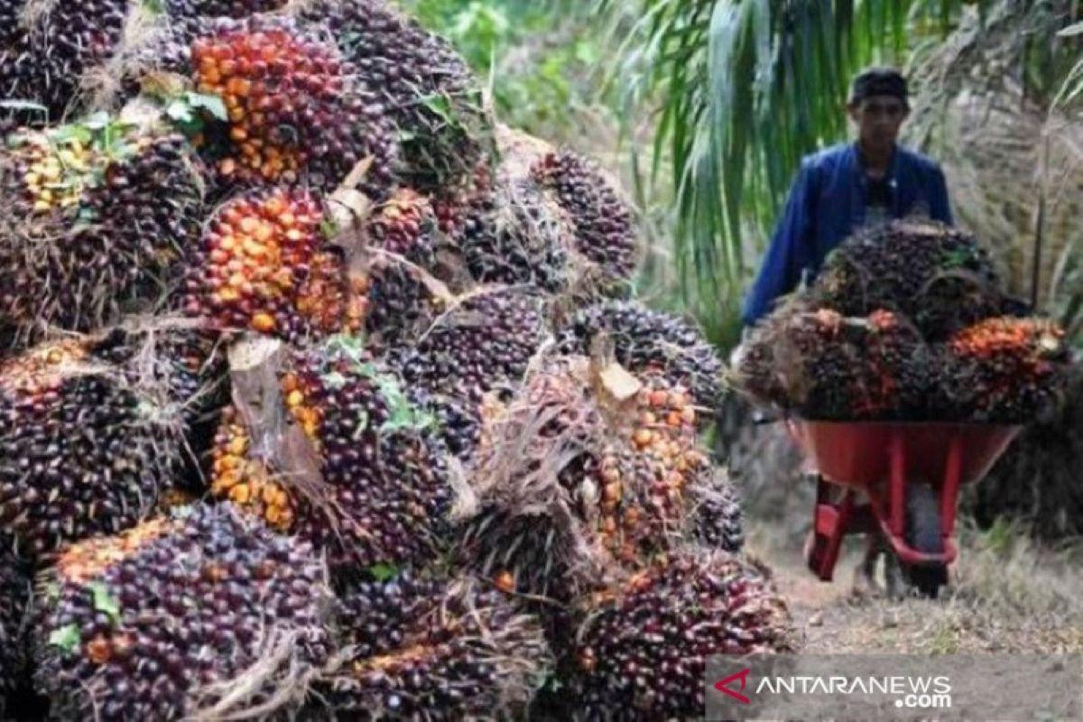 Tak Hanya Jambi, Harga CPO Riau Naik Tajam, Masih Bisa Berlanjut? - JPNN.com