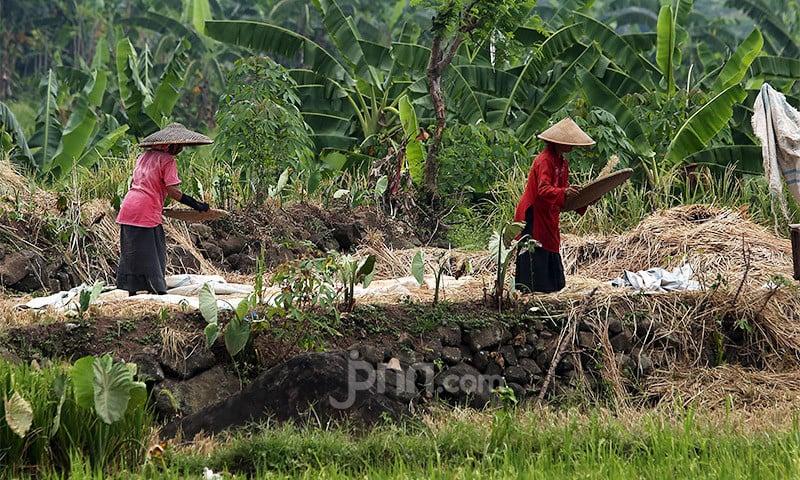 Dahsyat, Nilai Ekspor Sektor Pertanian Naik 33,04 Persen Selama Juni - JPNN.com