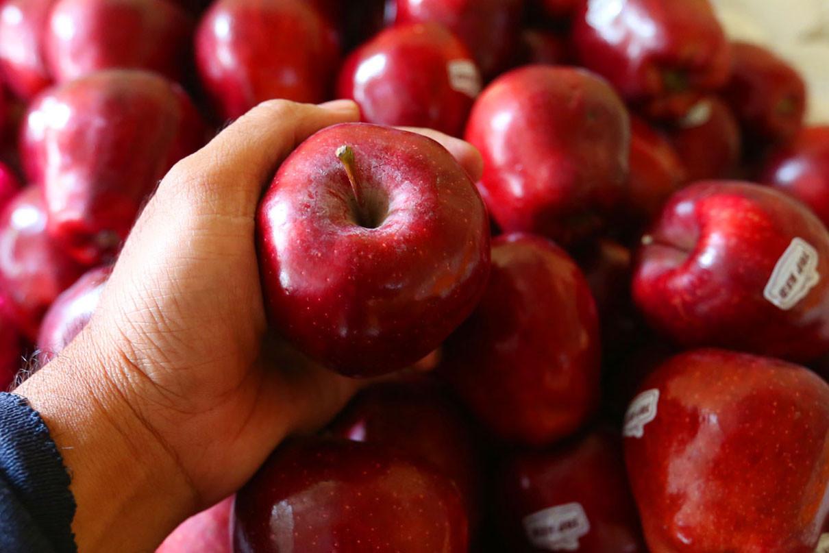 Sederet Manfaat Buah Apel Jika Rutin Dikonsumsi, Jangan Dilewatkan!