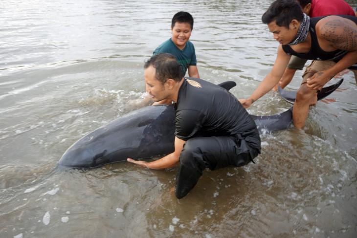 3 Ekor Lumba-Lumba Electra Terdampar di Pantai Tulungagung, Kemarinnya... - JPNN.com Jatim